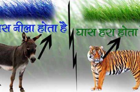 गधा और बाघ की कहानी Best Hindi Kahani